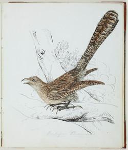 Louisa Atkinson, Bird