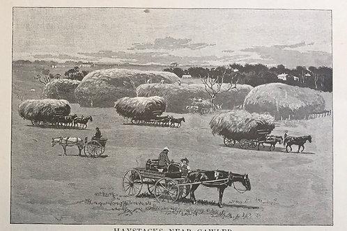 Haystacks near Gawler