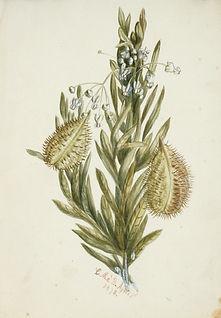 Emma Minnie Boyd,  Flower Study, 1878.jp