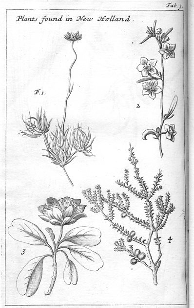 William Dampier, Plants found in New Holland, from a Voyage to New Holland, 1703