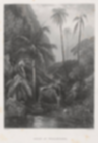 John Skinner Prout, Gully at Woolongong, Lithograph