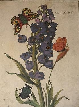Botanical Print, Plate11