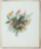 Louisa Atkinson, still life.PNG