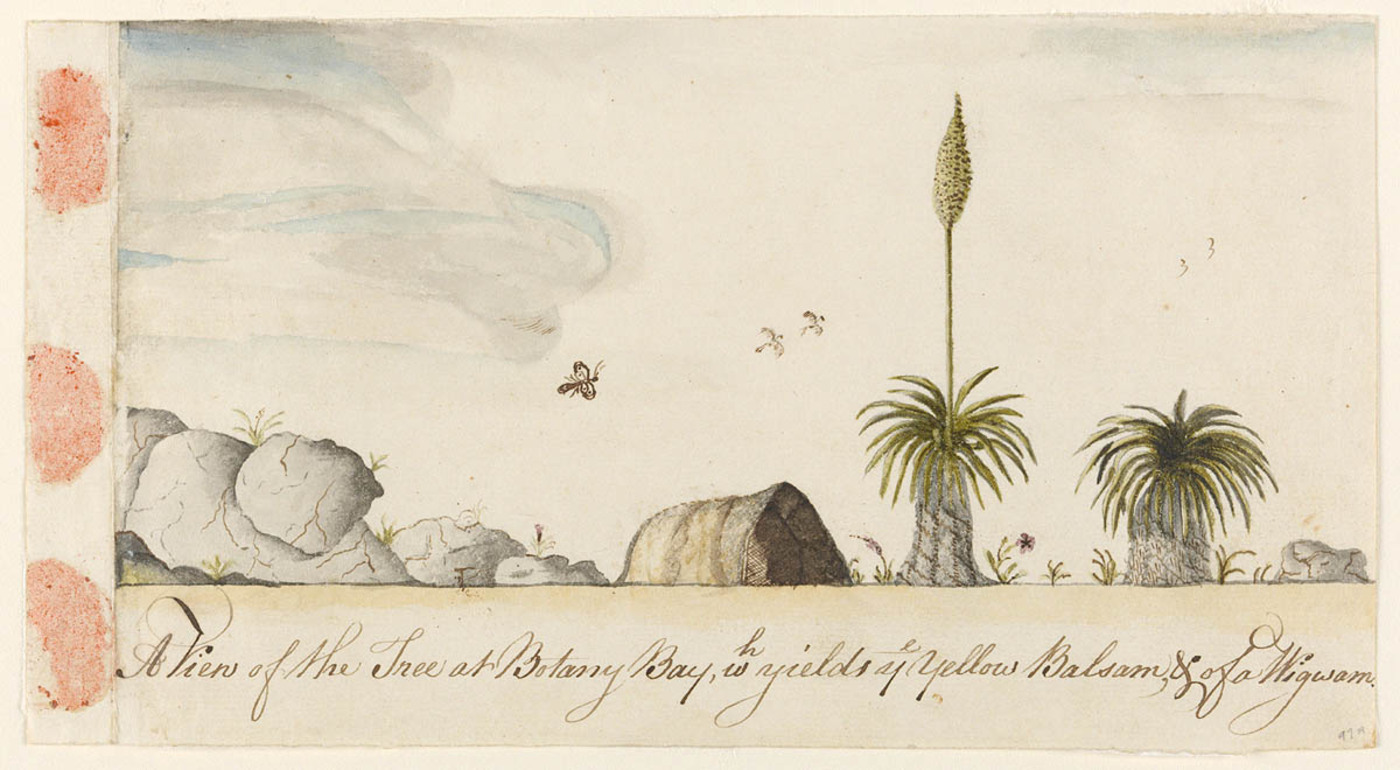 Arthur Bowes Smyth, Grass tree, or `A View of the Tree at Botany Bay, wh yields ye Yellow Balsam, & of a Wigwan