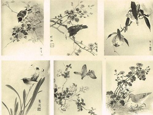 Japonais d'Art Decoratif  Plate 21