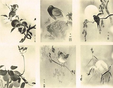 Japonais d'Art Decoratif  Plate 15
