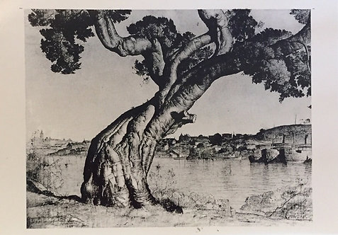 Lloyd Rees, Port Jackson FigTree
