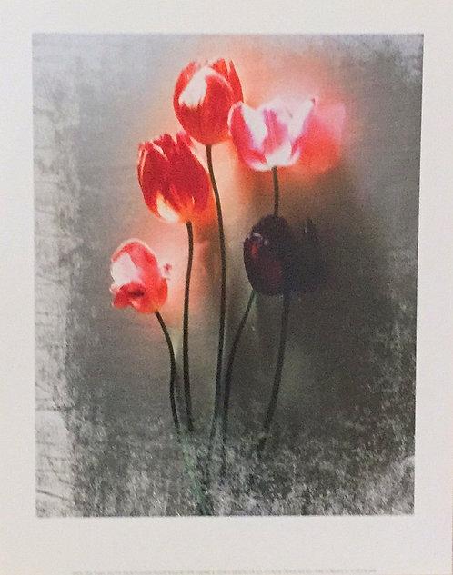 Shoji Yoshida, Five Tulips