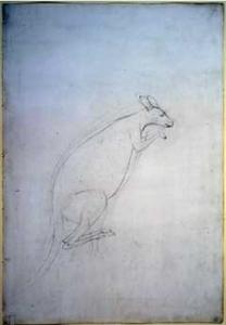 Sydney Parkinson, Sketch of a Kangaroo, 1770