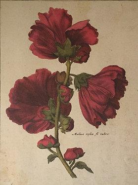 Botanical Print, Plate 5