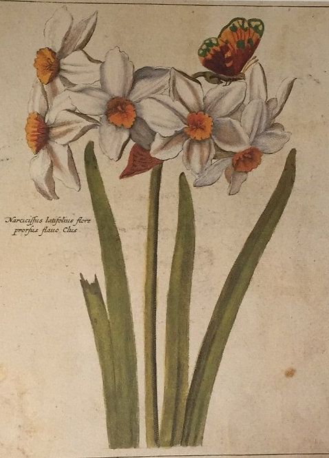 Botanical Print, Plate 6