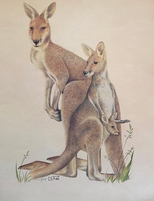 Diaz, Kangaroos