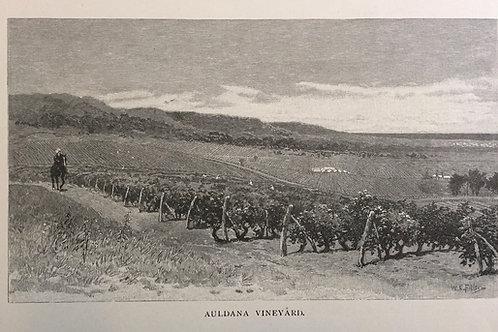 Auldana Vineyard