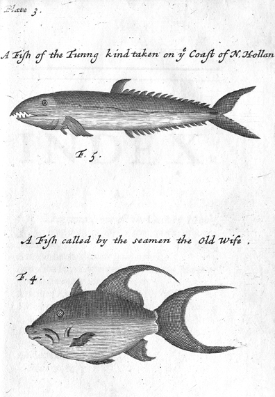 William Dampier, Fish Taken on the coast of New Holland, from a Voyage to New Holland, 1703