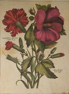 Botanical Print, Plate 15