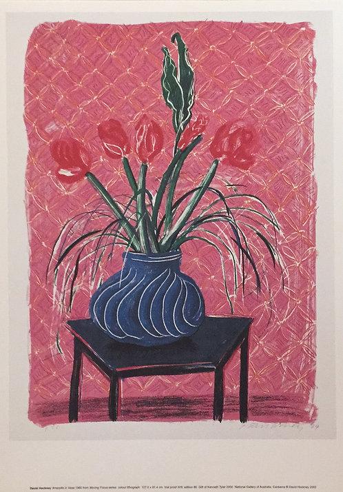 David Hockney, Amaryllis in Vase