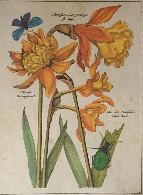 Botanical Print, Plate 4