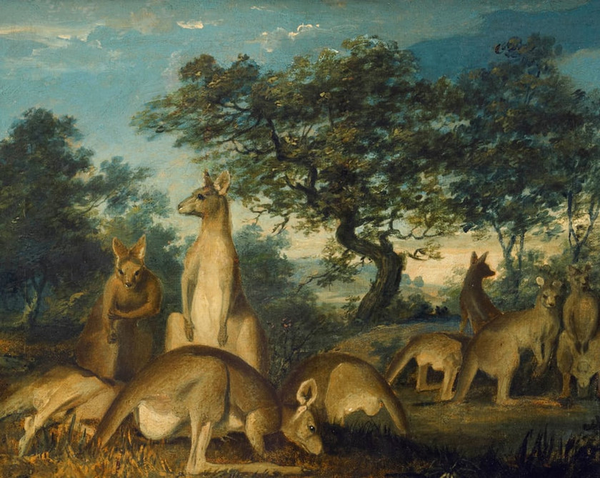 John Lewin, Kangaroos, c1812 first recorded oil