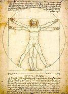 Leonardo da Vinci (1452-1519), Vitruviun Man, Study of proportions