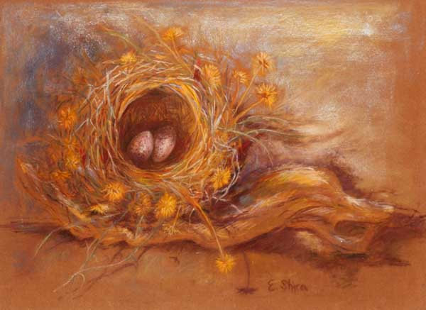 Bird's Nest   קן הציפור