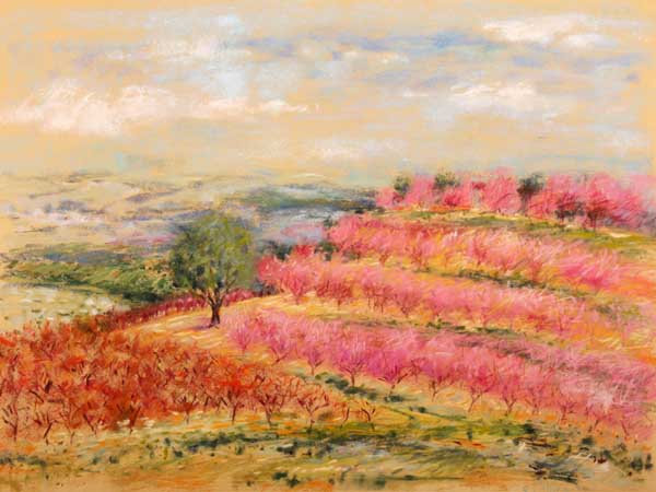 Peach Orchards (Rav Daniel) - פריחת האפרסקים
