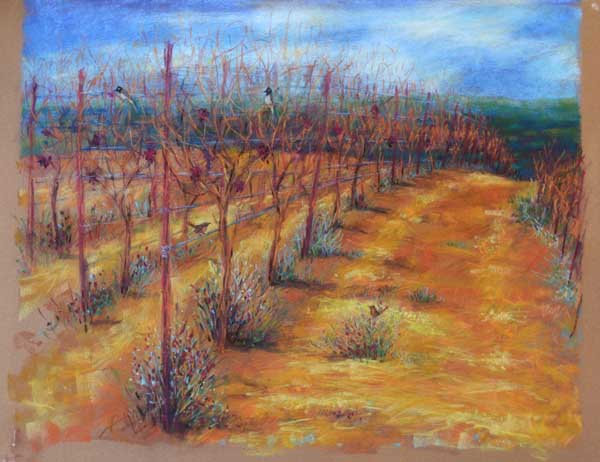 Winter Vineyard - כרם בחורף