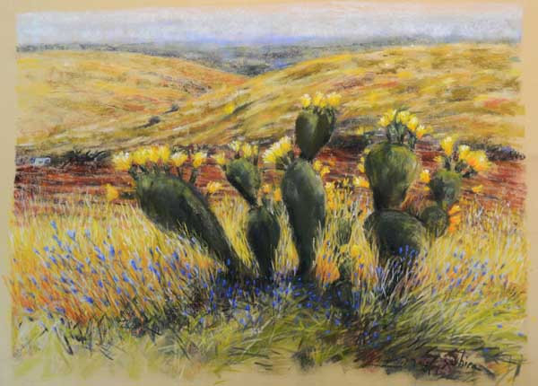 Cactus 'Sabra' - קקטוס - סברס