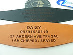 personalised Whippet / Greyhound collars