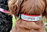 Personalised Embroidered Bamboo Dog Collar