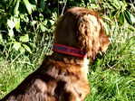 Presonalised Dog Collar | Nylon