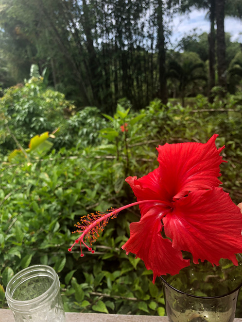 Red Hibiscus Flower Essence