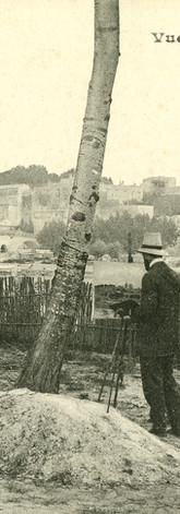 Artiste peignant le pont Saint-Bénezet, les rempart et le Palais des papes depuis l'ïle de la Barthelasse