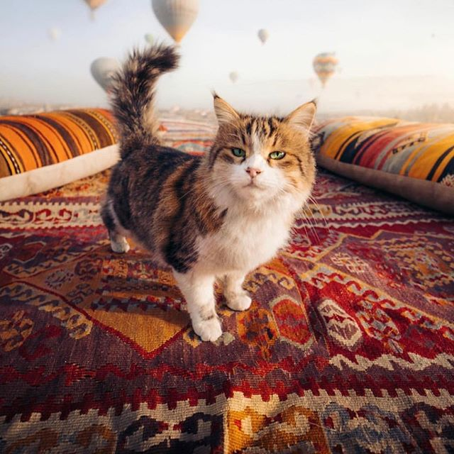 Cats and carpets and Cappadocia - an irr