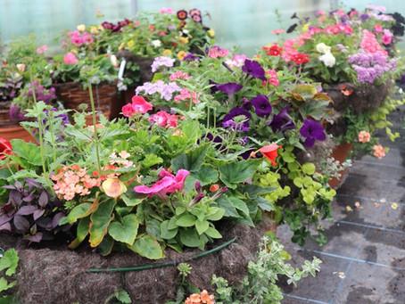 Summer Bedding & Compost 17/04/2020