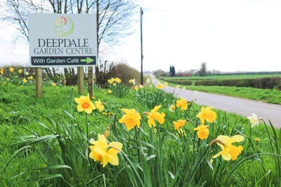 Deepdale Garden Centre Sign with Daffodils
