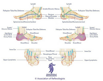 Heart & Sole | Refexology Foot Maps