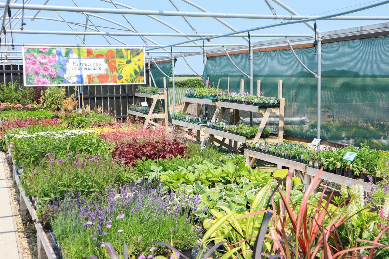 Plant Shop at Deepdale Garden Centre