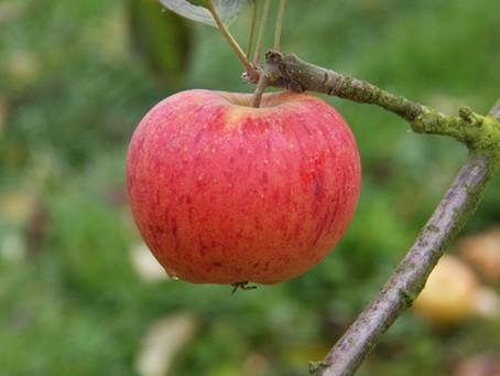 Deepdale's Top 5 Small Garden Trees