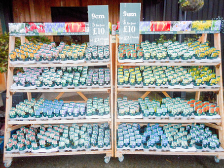 Brand New Spring Bulb Collection at Deepdale
