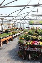Plant Shop at Deepdale Garden Centre