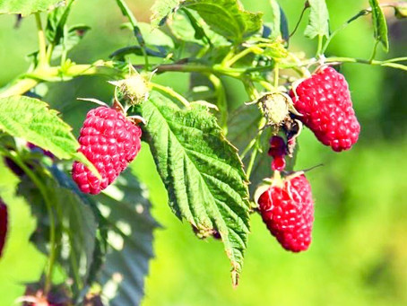 Deepdale's Top 5 Soft Fruits