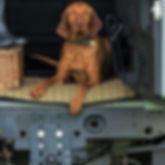 Tweedmill Pet.jpg