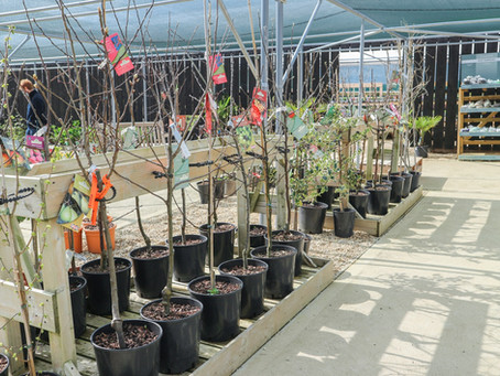 New In! Ornamental & Fruit Tree Collections