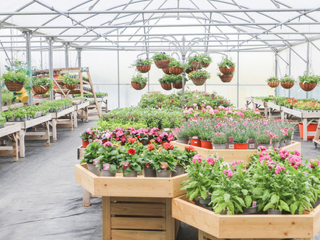 New In! A-Z Summer Bedding Plants