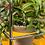 Thumbnail: Haller World of Plants