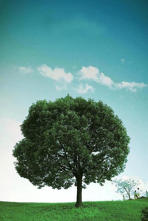 나무_01.JPG