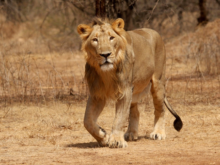 Gir National Park & Wildlife Sanctuary