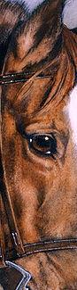 Qtr Horse Vert.jpg