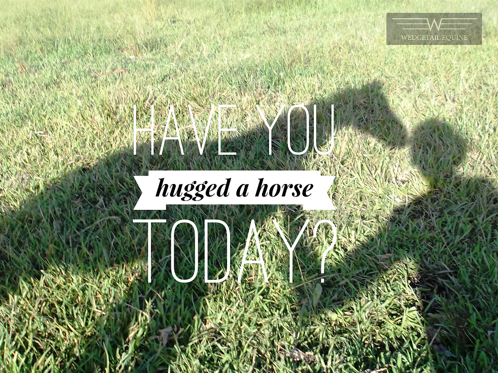 Health benefits of horses