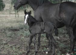 Eclipse and Fonzi foal